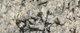 granito naturamia levantina lennon